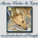 Aimee, Merlin & Xena's Bericht...