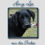 Amy-Lee's Bericht...