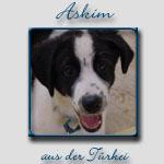 Askim's Bericht...