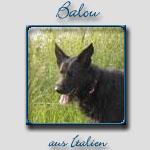 Balou's Bericht...