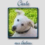 Carlo's Bericht...
