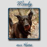 Meedy's Bericht...