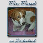 Miss Marpel's Bericht...