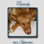 Numa's Bericht...