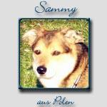 Sammy's Bericht...