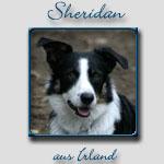 Sheridan's Bericht...