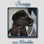 Snoopy's Bericht...