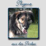Thyme's Bericht...